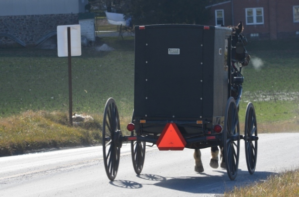 Mennonite buggy 2013 (640x424)