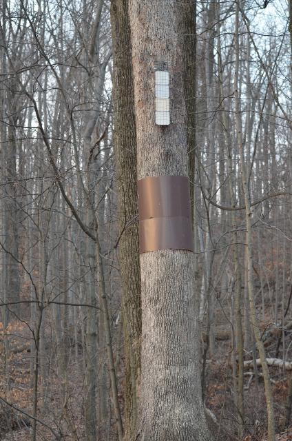 tree (424x640)