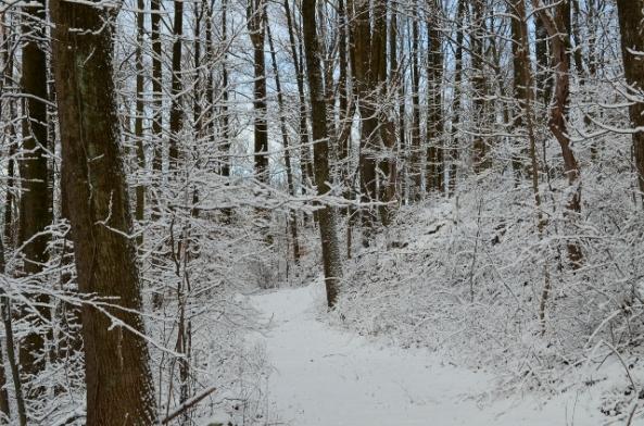 snowy path (640x424)
