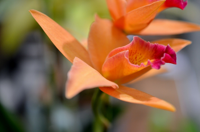 flower show 16 (640x424)
