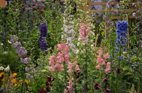 flower show 19 (640x424)