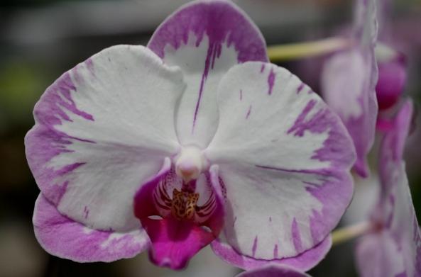 flower show 5 (640x423)