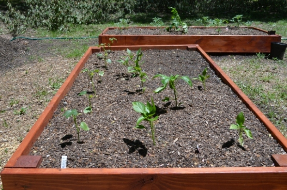 raised beds (640x424)
