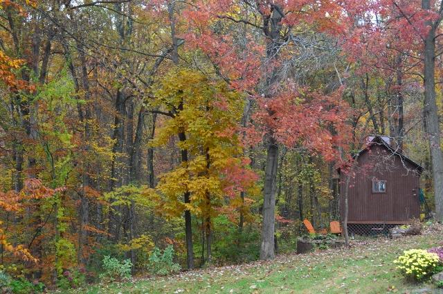 backyard 2 (640x424)