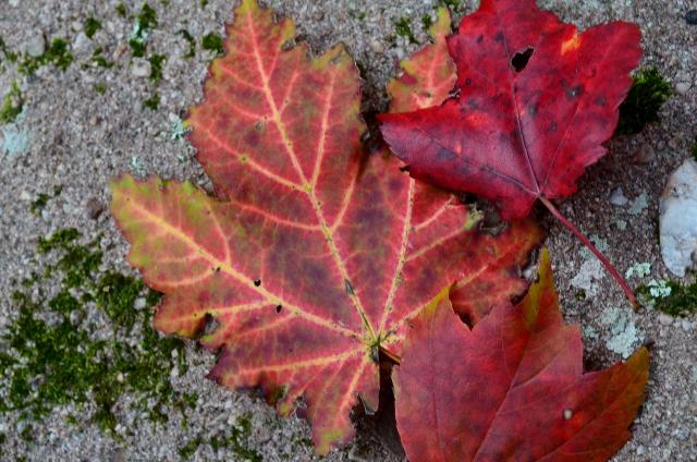 leaves (640x424)
