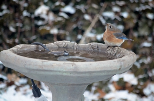 female bluebird bath 1 (640x423)
