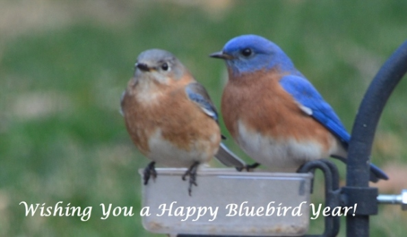 Happy Bluebird Year (640x374)
