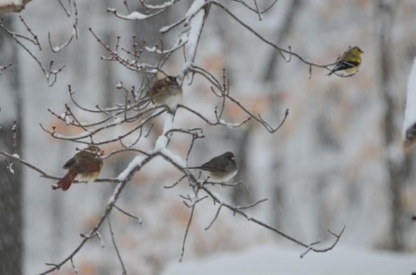 four birds (640x424)