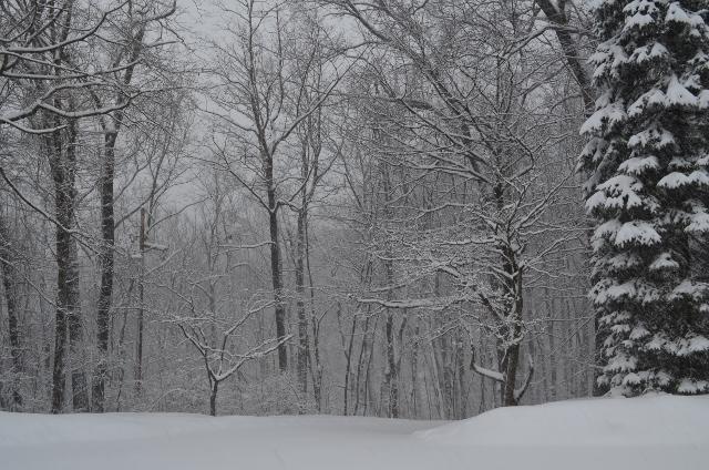 snow 2 (640x424)
