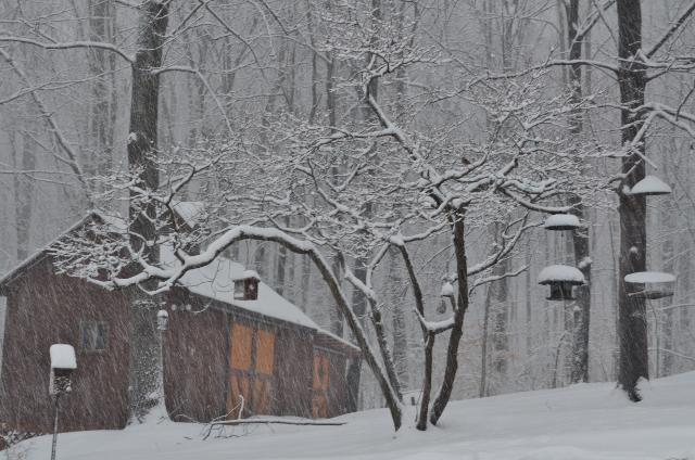 snow falling (640x424)