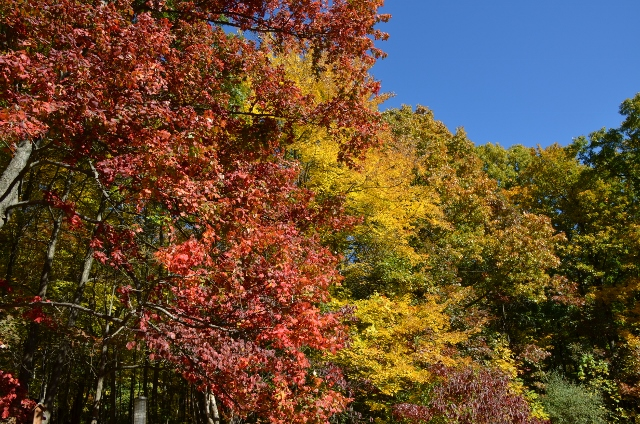 leaves 2 (640x424)