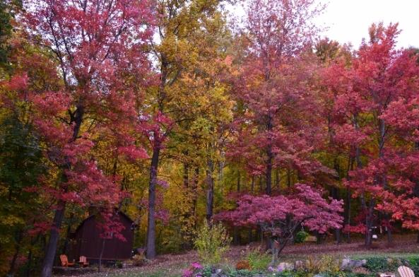 leaves 4 (640x424)