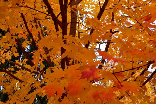 leaves (640x427)