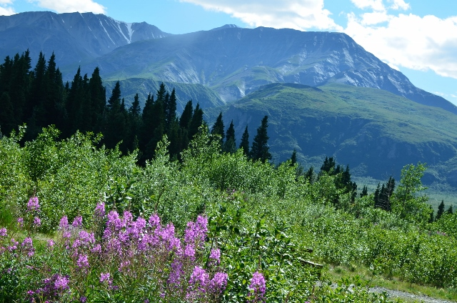 mountains flowers (640x424)